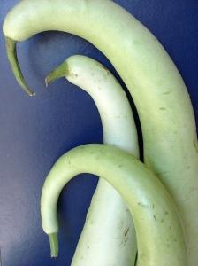 Zucchina lunga - Immagine presa da internet